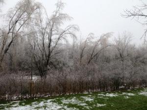 ice yard