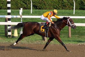 horse racing dominus