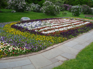 American Flag Pansy Bed