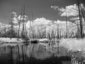 infrared swamp photo