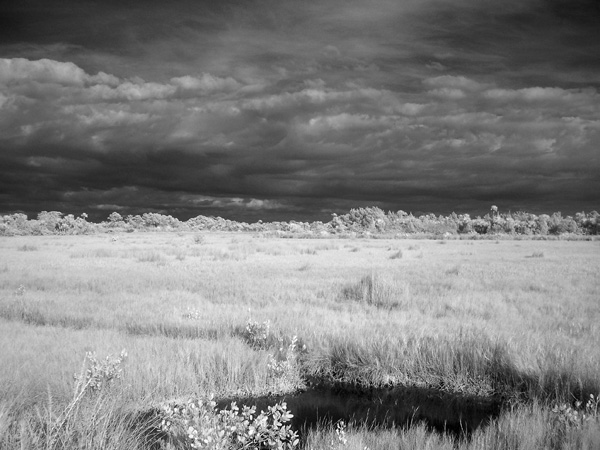 Infrared Wetlands