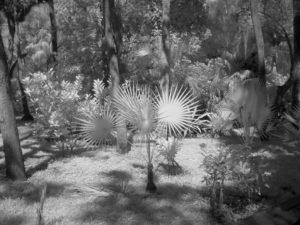 IR Gardens