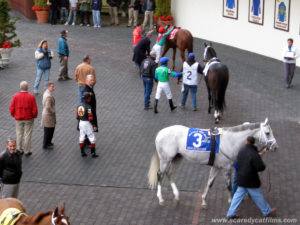 Pletcher, Coa and Harlem Rocker