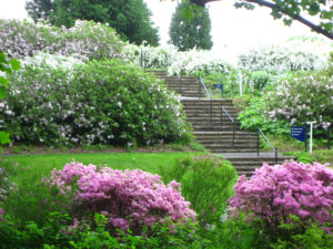 Stairs and Azaleas